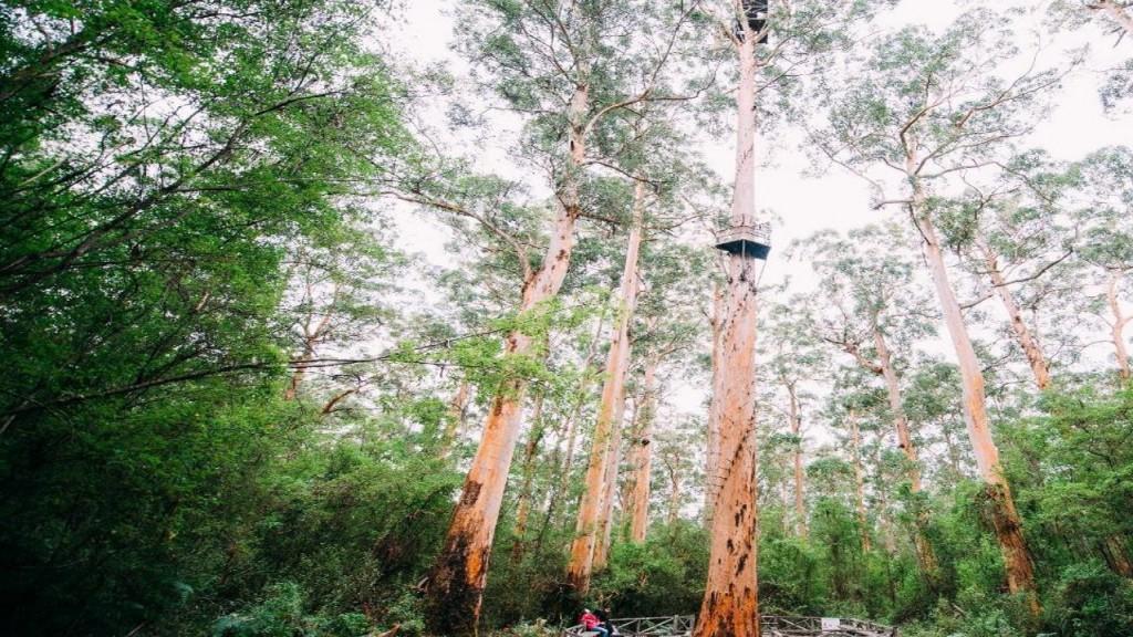Baumwipfelpfad im Südwesten