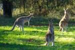 Kangaroo Island – die Insel der Jahreszeiten