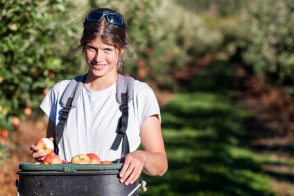 Backpackerin beim Früchte ernten