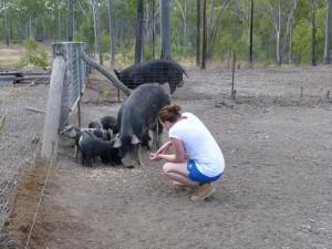 Wwoofing-Erfahrungen auf Rob und Dylans Schweinefarm
