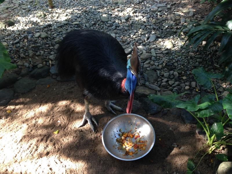 vogel-frühstück, port douglas