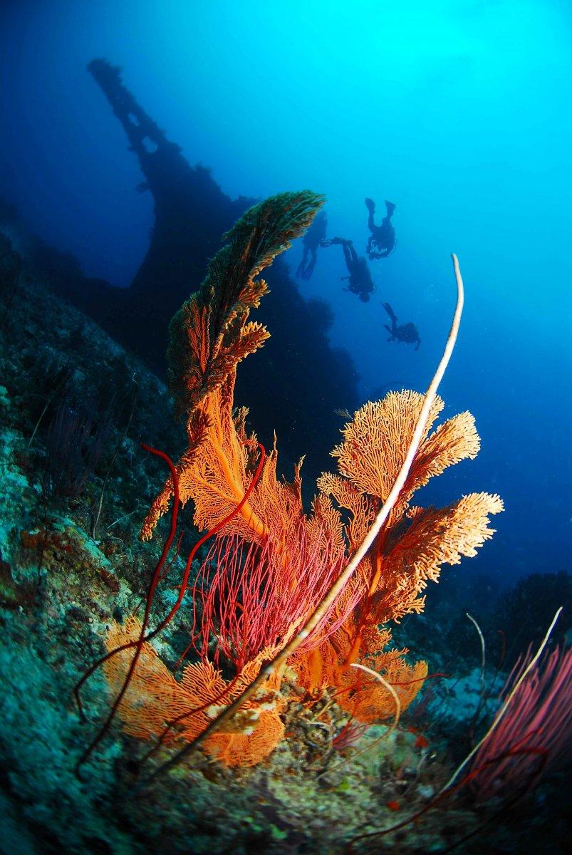 Koralle beim Tauchen, Great Barrier Reef