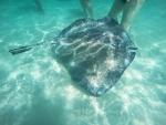 5 Tipps um Westaustraliens Meeresbewohnern zu begegnen