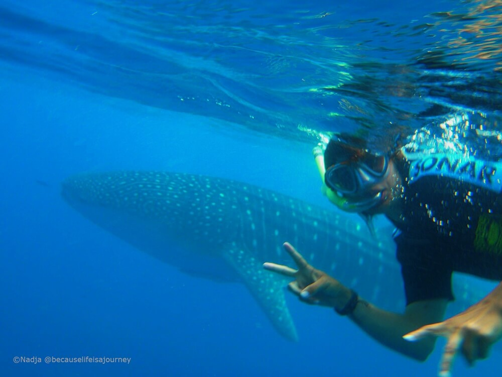 Taucher mit Walhai