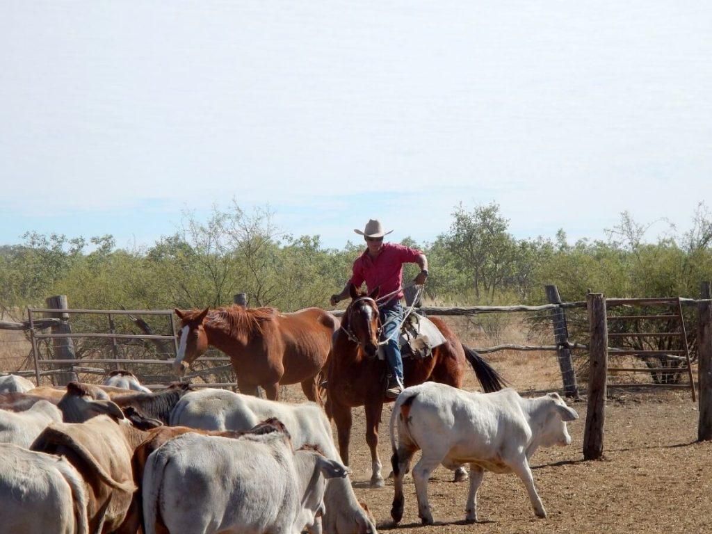 Farmarbeit für das Second WHV