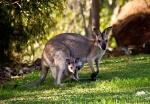 Mit der Fähre von Cape Jervis nach Kangaroo Island